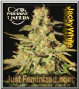 Paradise Jacky White original feminized major seed bank Seeds